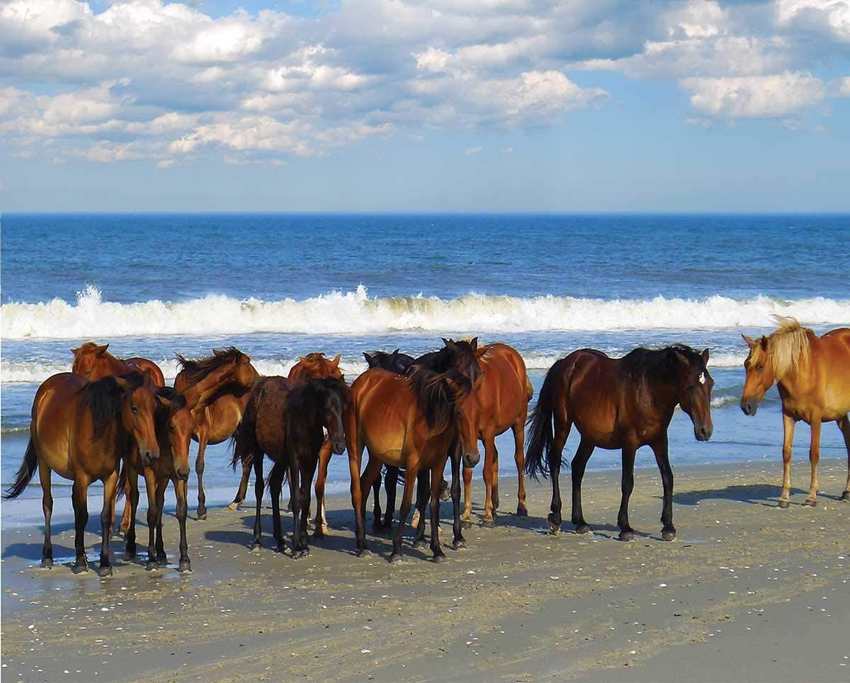 Heritage Beach Party Jigsaw Puzzle - 1000 Pieces - Horses by the Ocean