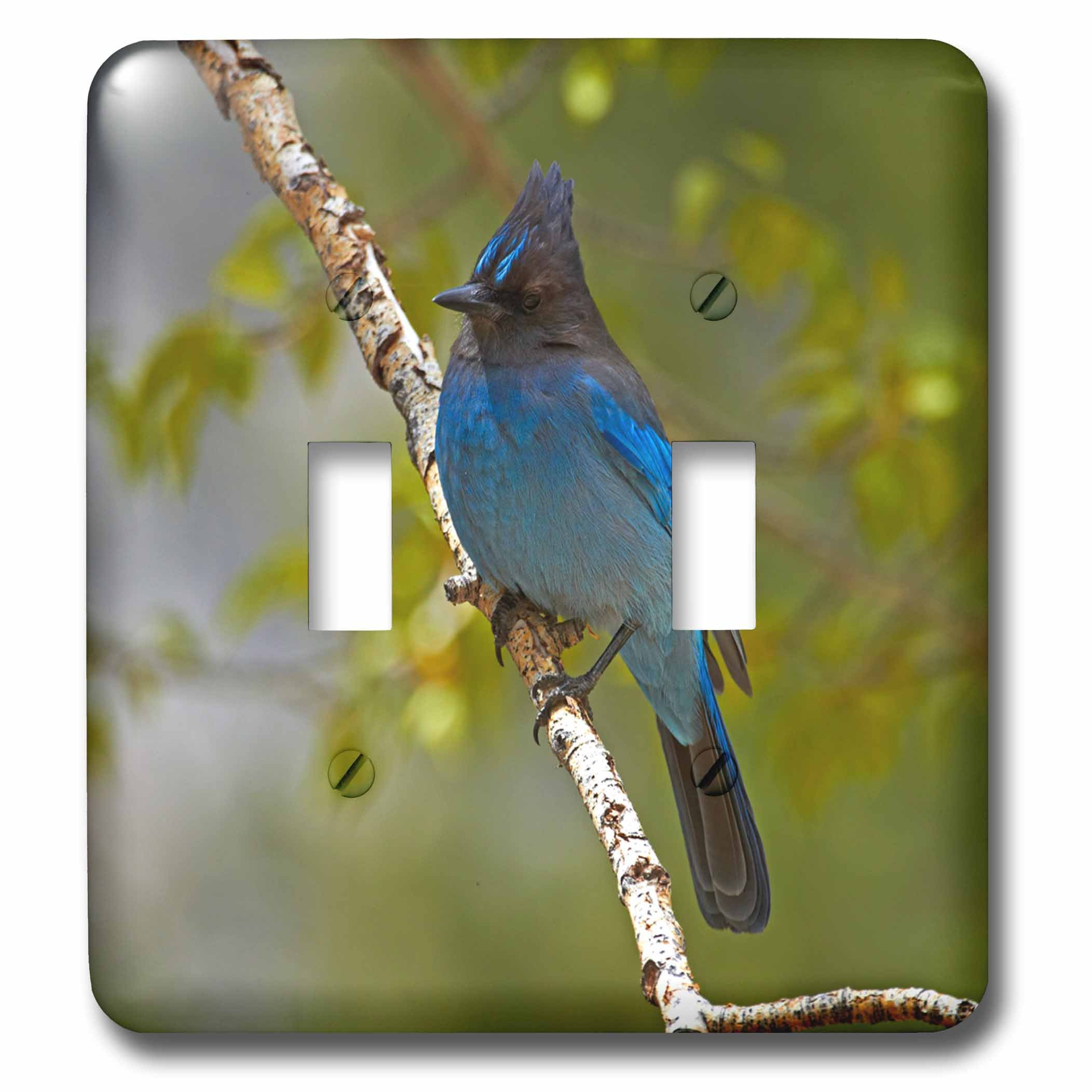 Danita Delimont - Birds - Stellers jay, Sierra, California, USA - Light Switch Covers - double toggle switch (lsp_230097_2)