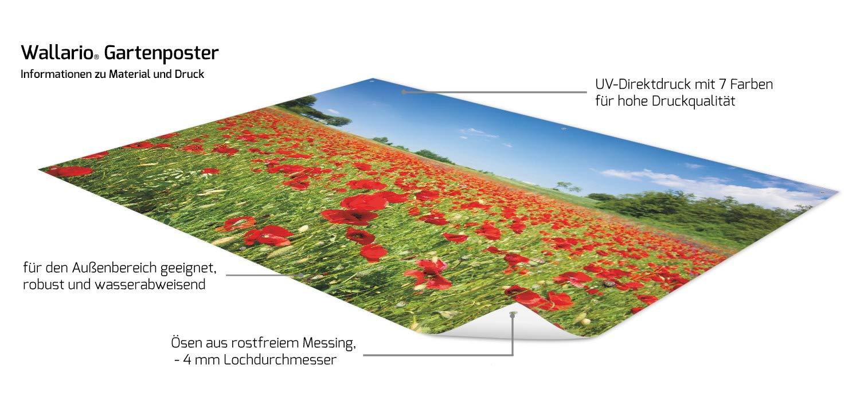 Wallario Garten-Poster Outdoor-Poster Gr/ö/ße: 61 x 91,5 cm Mohnblumenfeld- rote Blumen unter blauem Himmel in Premiumqualit/ät f/ür den Au/ßeneinsatz geeignet