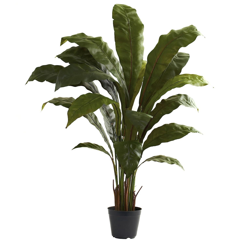 Amazon.com: Nearly Natural 6739 Birdsnest Plant, 3.5-Feet, Green ...