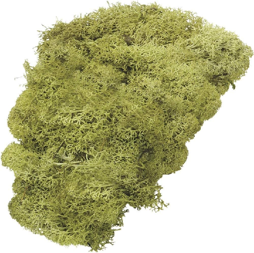 Beige Knorr Prandell Icelandic Moss 50g Natural