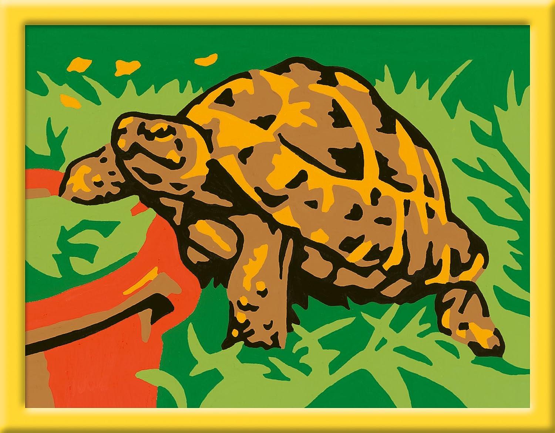 Berühmt Ninja Schildkröte Farbseiten Fotos - Malvorlagen Von Tieren ...