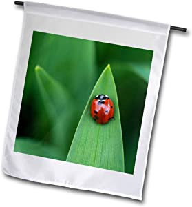 3dRose Macro Photograph of The top View of a Ladybug on a Daylily Leaf. - Flags (fl_335375_1)