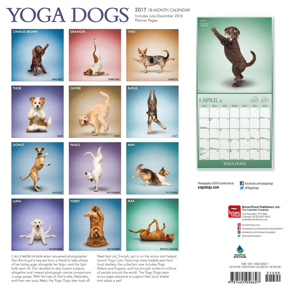Yoga Dogs (Square Wall): Amazon.es: Inc Browntrout ...