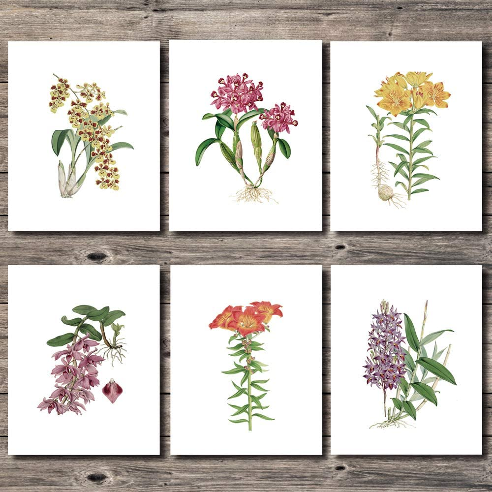 3 COLOR ART 6 Pieces Set Botanical Prints, 8x10 Nature Floral Wall Art, Unframed Green Plant Artwork for Bathroom, Living Room, Bedroom
