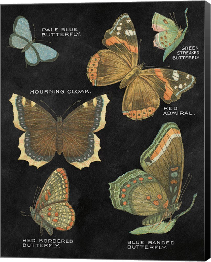 Botanical Butterflies Postcard III Black by Wild Apple Portfolio Canvas Art Wall Picture, Museum Wrapped with Black Sides, 24 x 30 inches