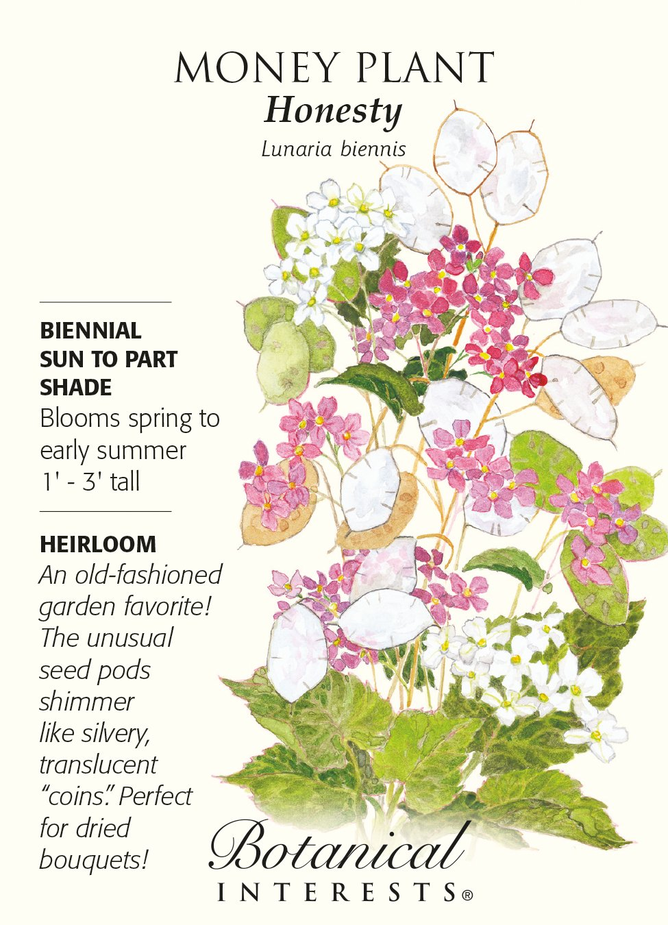 Amazon.com : Money Plant Honesty Heirloom Seeds 60 Seeds : Cress ...