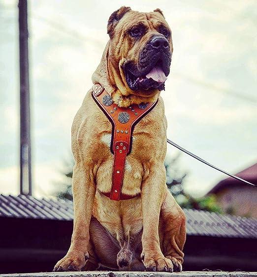 Bestia Maximus - Arnés de Piel para Perro Grande: Amazon.es ...