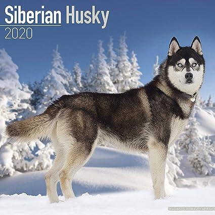 Siberian Husky Calendar 2020 - Dog Breed Calendar - Wall Calendar 2019-2020