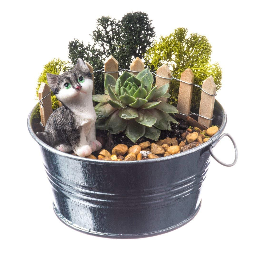 Succulent Terrarium Kit | Curious Cat | Farm Series | Complete DIY Gift Set | 4'' Silver Galvanized Pot With Sempervivum Succulent | Nautical Crush Trading