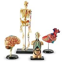 Learning Resources Anatomy Models Bundle Set, Brain, Body, Heart, Skeleton, Classroom...