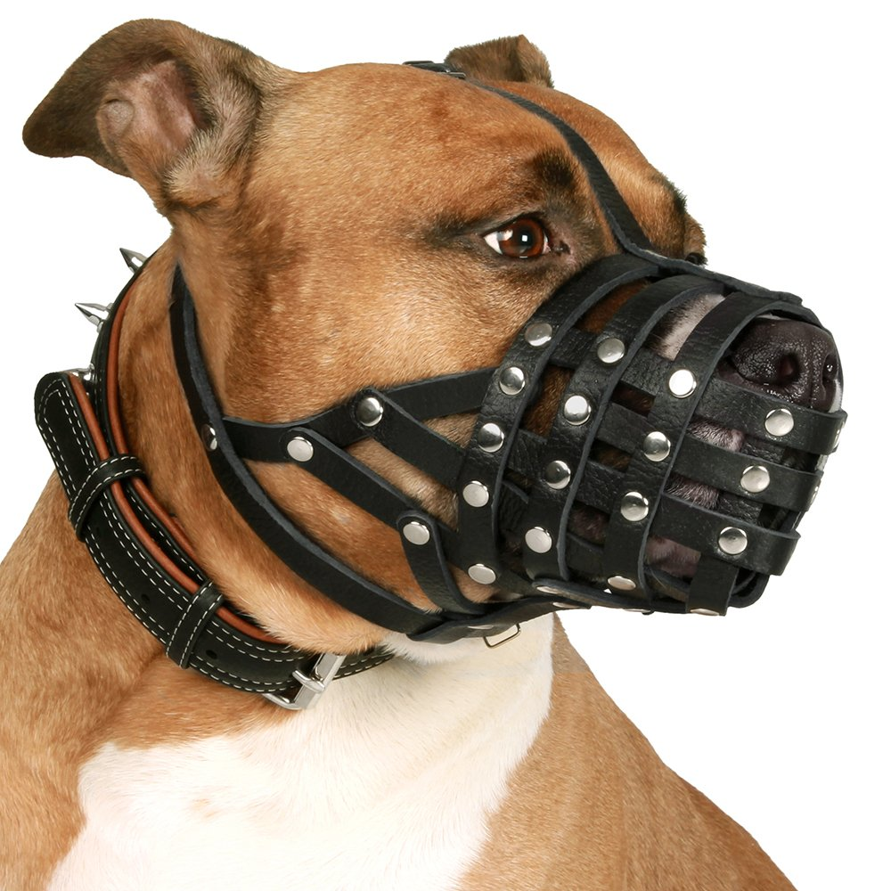 CollarDirect Pitbull Dog Muzzle
