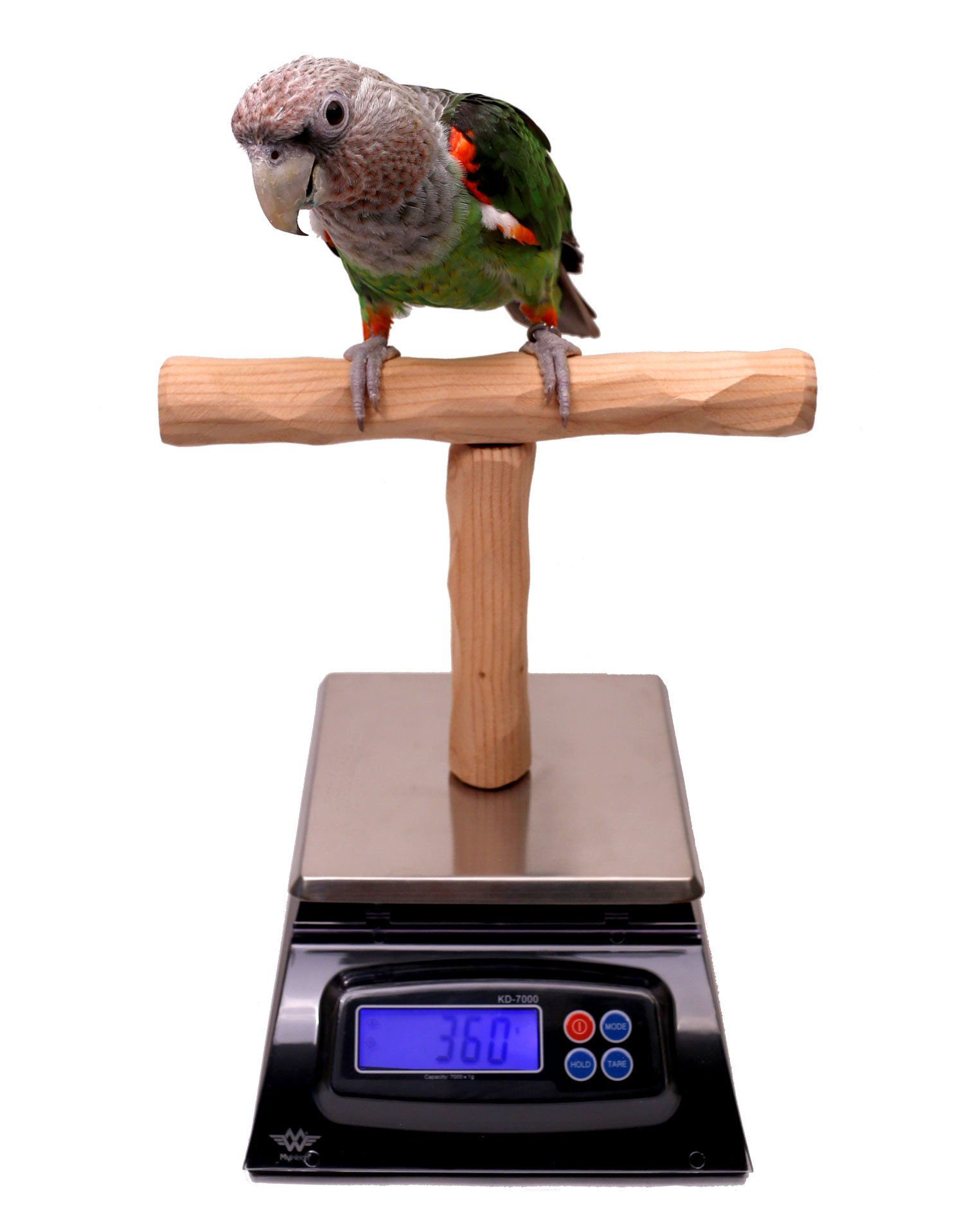 NU Perch Parrot Training Scale by Parrot Wizard