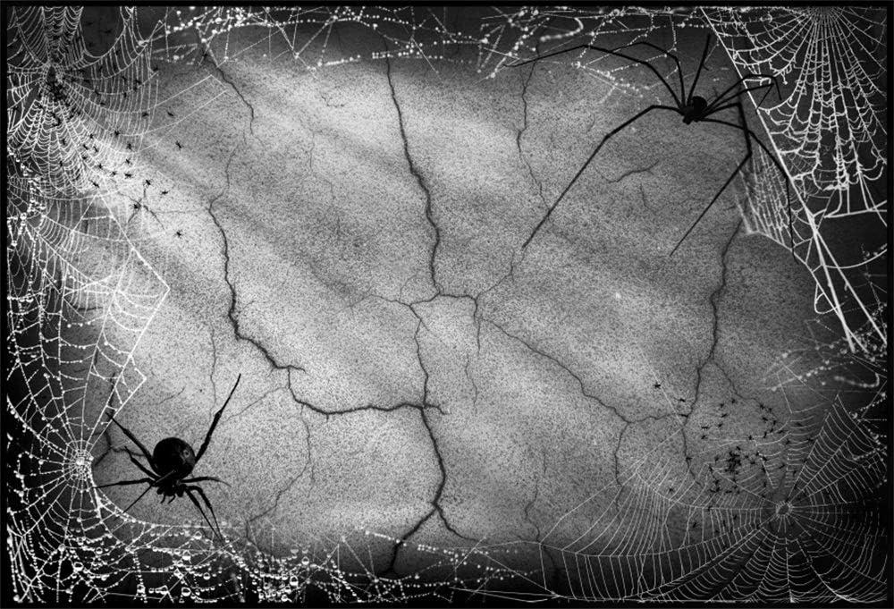 YongFoto 10x7ft Halloween Vinyl Backdrop Spiders Bats Happy Halloween Vintage Black Scene Photography Background Party Theme Banner Family Home Decor Poster Portrait Photo Shoot Studio