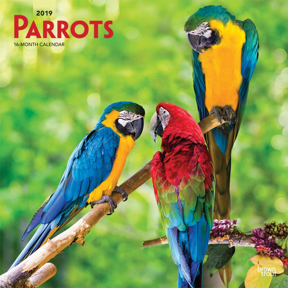 Parrots 2019 12 x 12 Inch Monthly Square Wall Calendar, Domestic Wildlife Animals Birds (Multilingual Edition) by BrownTrout Publishers