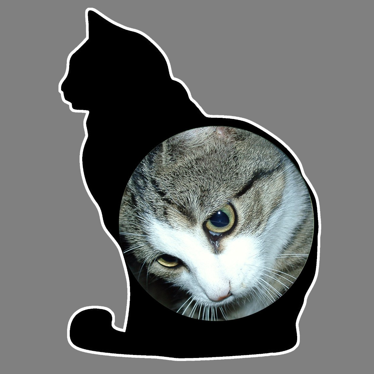 Parking Permit Holder Skin Black Cat Kitten Silhouette Free UK Postage