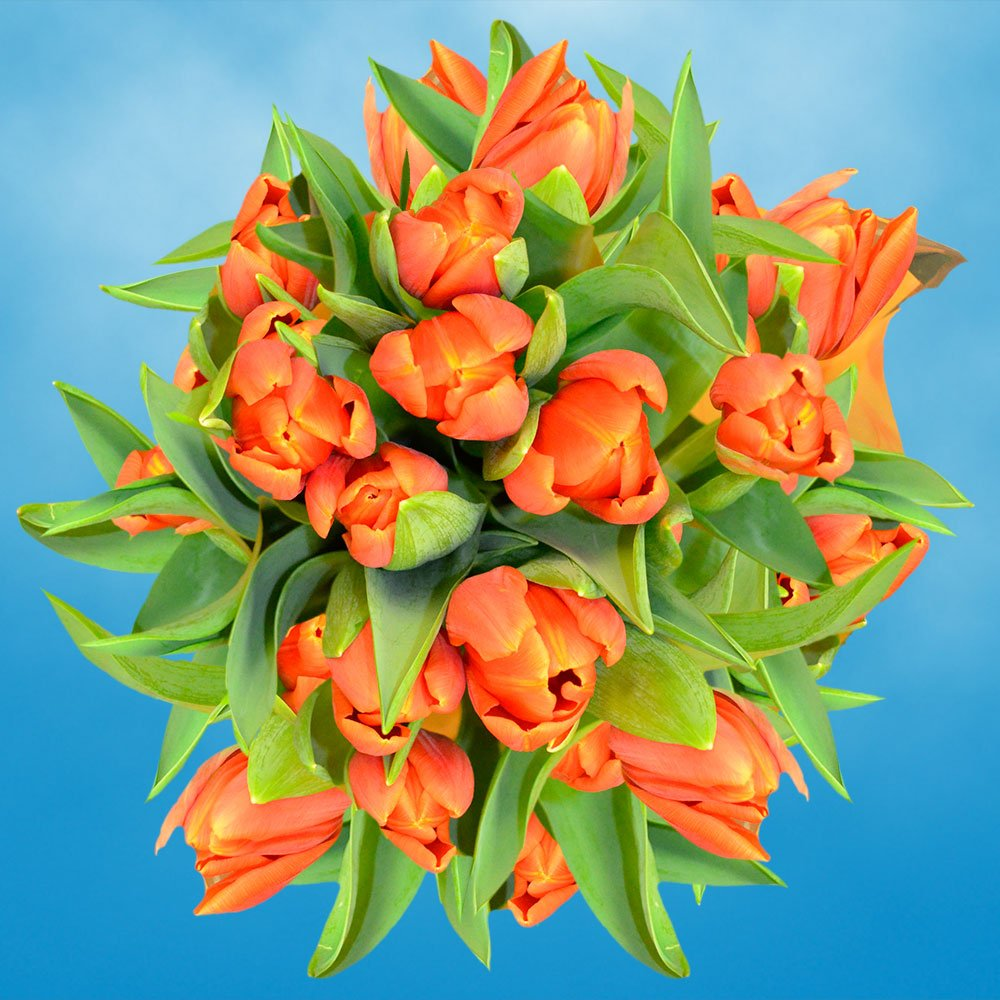GlobalRose 30 Stems of Orange Tulips Flowers - Fresh Flowers for Delivery