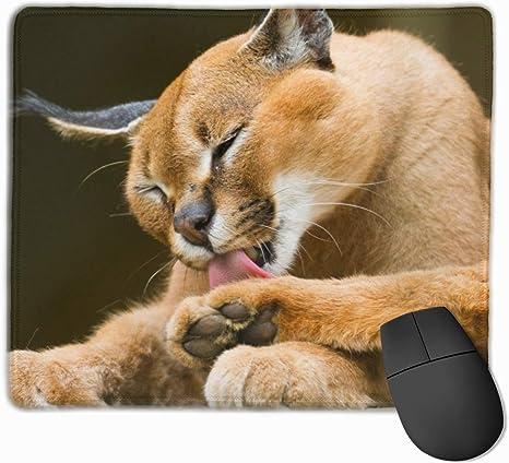 mouse puma