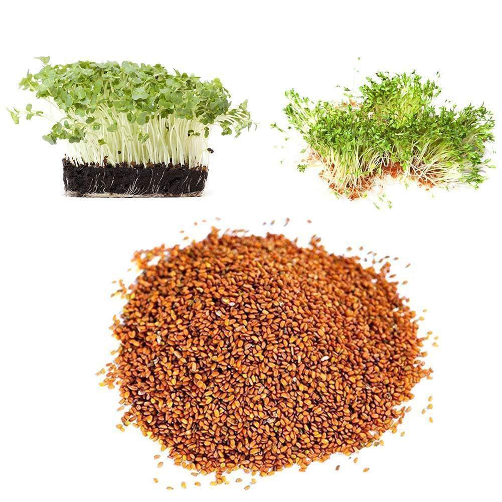 de cultivo ecol/Ã/³gico de la herencia hierba Portal Cool Semillas 200G mastuerzo Vest Lepidium sativum