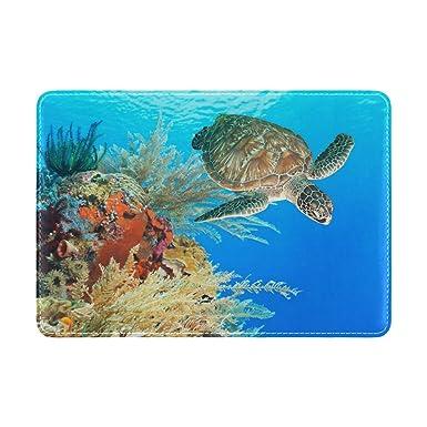 Amazon.com: Cooper niña tortuga de mar entre las Coral Reef ...