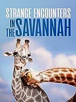 Strange Encounters In the Savannah