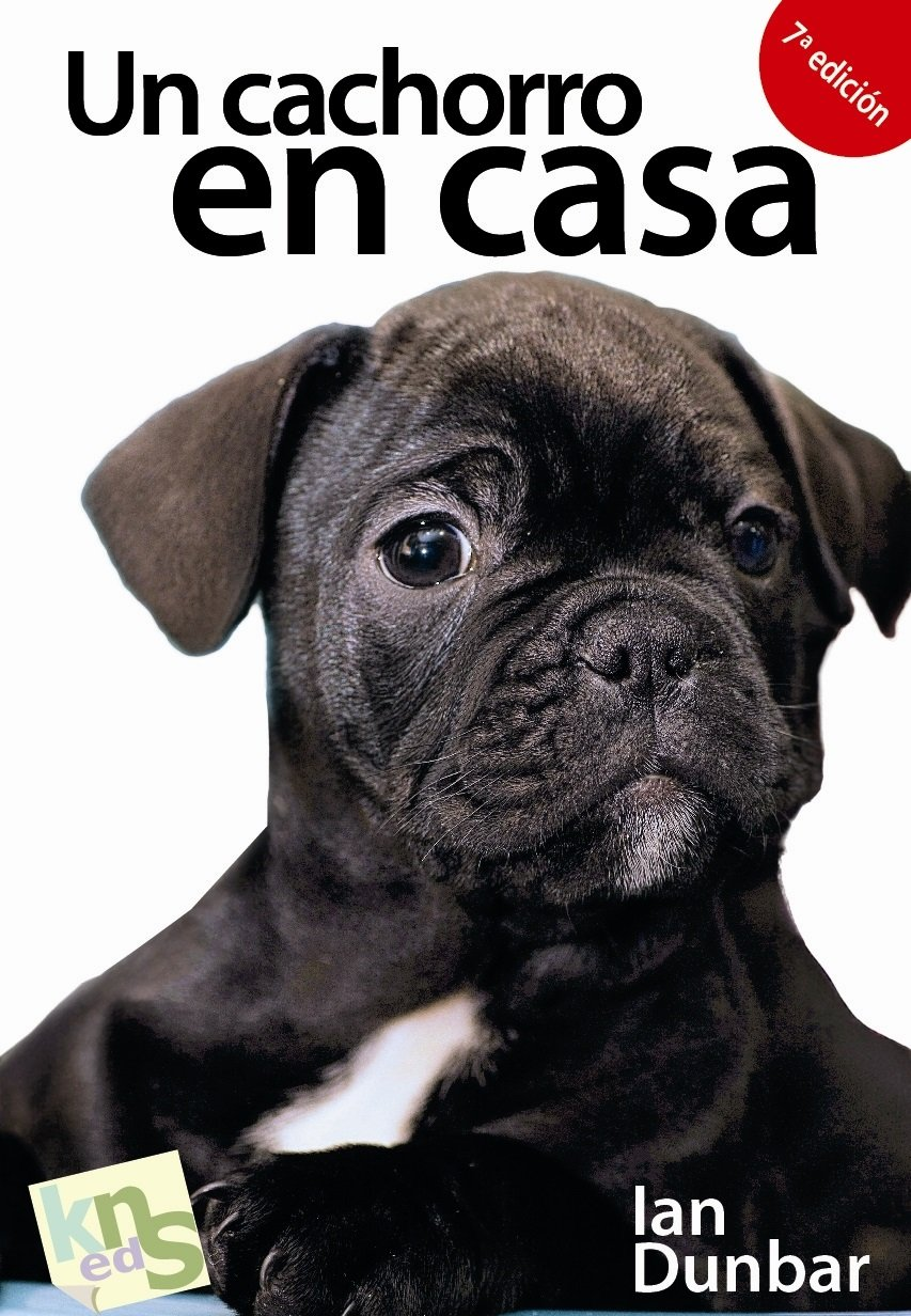 Un cachorro en casa: ¡No hay tiempo que perder!: Amazon.es: Ian ...