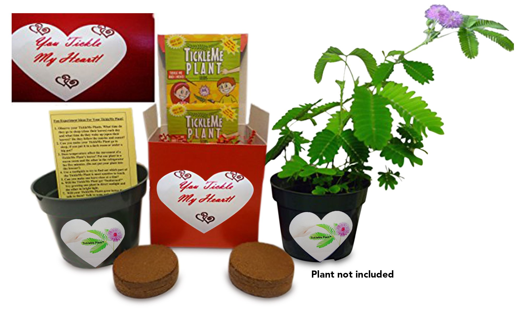 TickleMe Plant You Tickle My Heart Box - Share Growing The Plant That Closes its Leaves When Tickled or When Blown a Kiss. It Also Flowers by TickleMe Plant