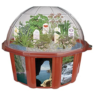 DuneCraft Dome Terrariums Exotic and Fun Plants from Around The World: Toys & Games