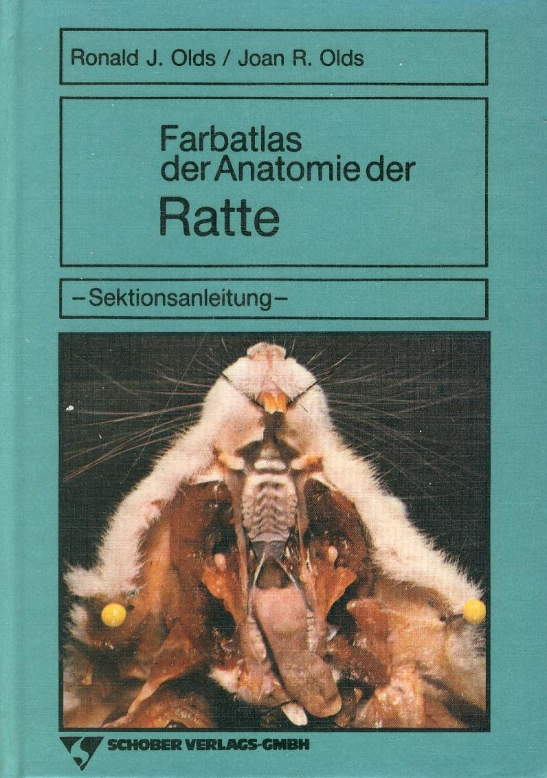 Ausgezeichnet Ratte äußere Anatomie Fotos - Anatomie Von ...
