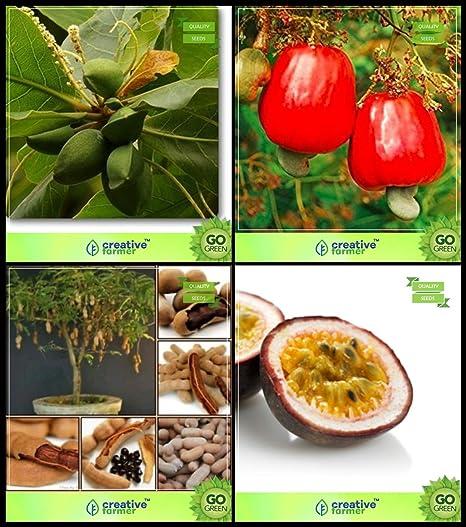 Creative Farmer Seeds Online India Combo Tree Seeds : Sea