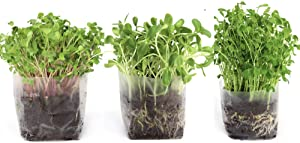 Pop Up Microgreens Kit (3 Varieties) – Just Add Water and Seed. Perfect Size, a Quick, Smart, Nutritious Meal. Includes Fiber Soil in a Bag, Radish, Sunflower, Pea Shoot Seed. Easy Grow/Delicious.