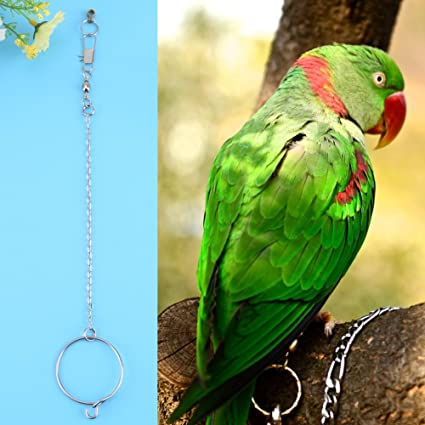 Amazon com : Stainless Steel Anklet Pet Parrot Birds Foot Chain +