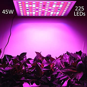 best lights growing reviews for by in experts grow light under plant led