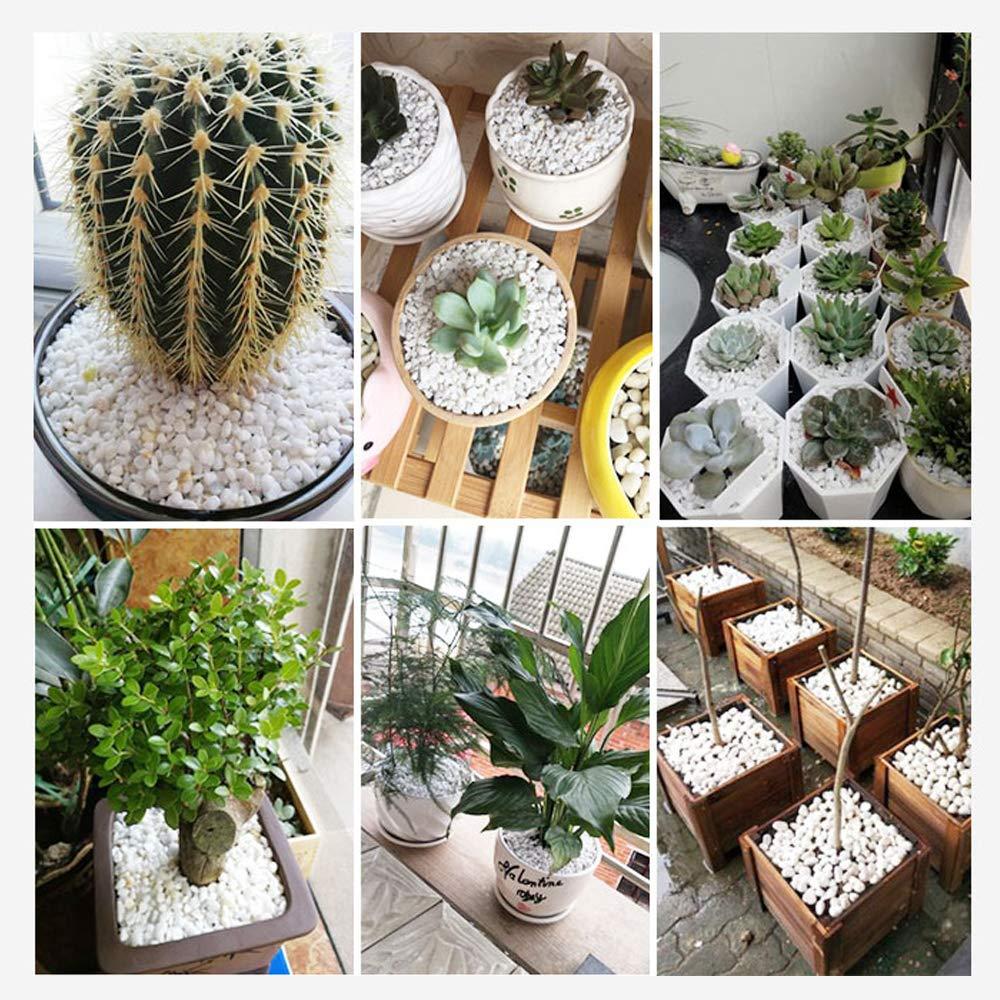 JWShang Pequeña Piedra Blanca para decoración de jardinería, Plantas ...