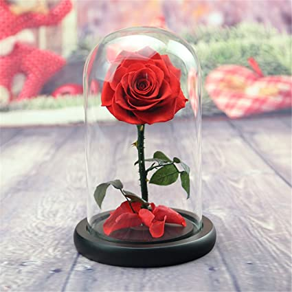 Beauty And The Beast Rose Live Forever Rose In Glass Live