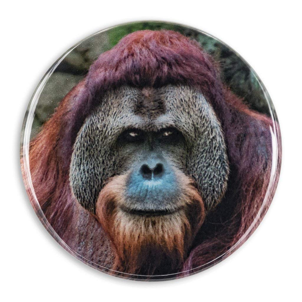Orangutan Closeup with or without Wiggly Eyes Pocket Mirror Refrigerator Magnet or Pinback Button