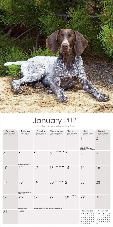 Deutsche Shorthaired Pointer 2021 Hund Rasse Kalender 15/% OFF Multi Bestellungen