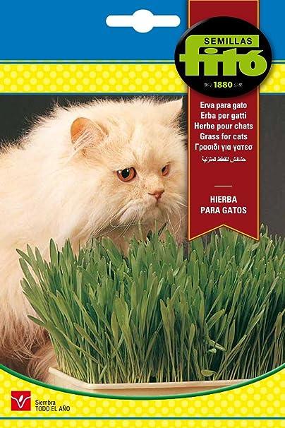Semillas Fitó 4262 - Hierba para Gatos: Amazon.es: Jardín