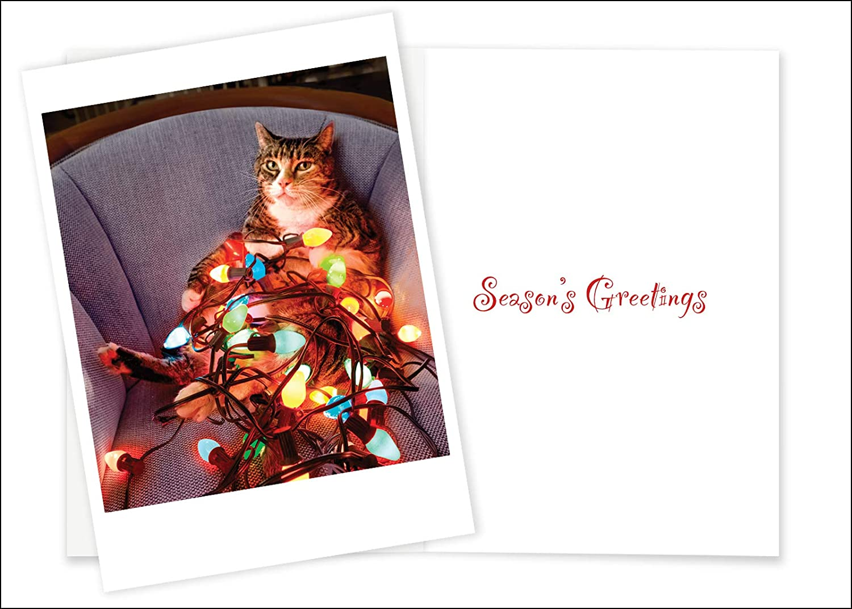 Amazon.com : Christmas Cards Palm Press Inc Cat Holiday Lights ...