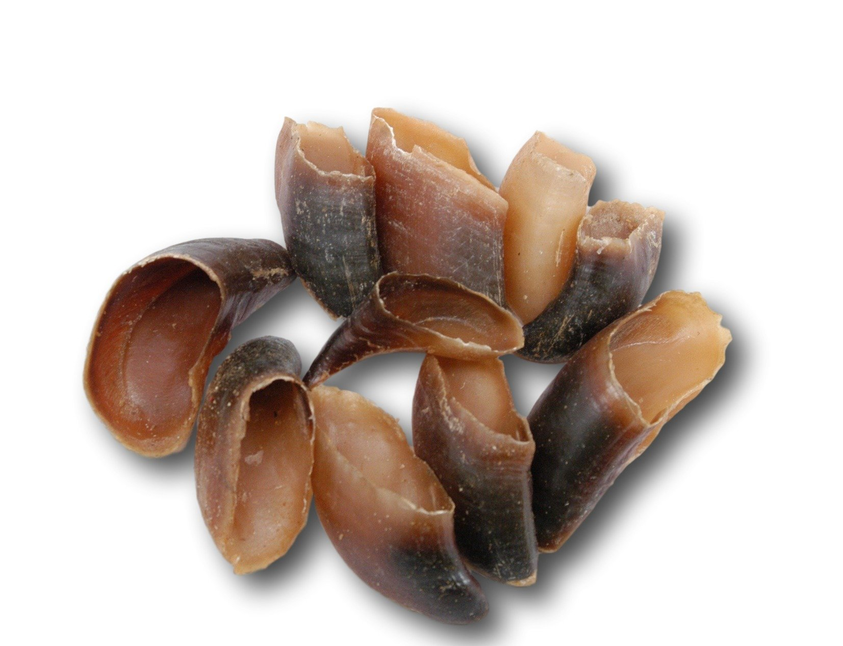 Natural Cow Hooves for Dogs - QTY 25 Made in the USA Bulk Dog Dental Treats & Dog Chews Beef Hoof, American Made by Great Lakes Merchandise (Image #1)
