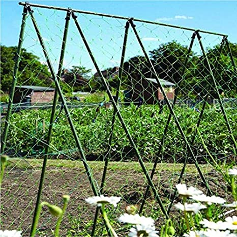 Nutleys 30 x 2 m Pea and Bean Netting Green