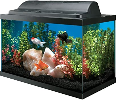 All Glass Aquariums 10-Gallon