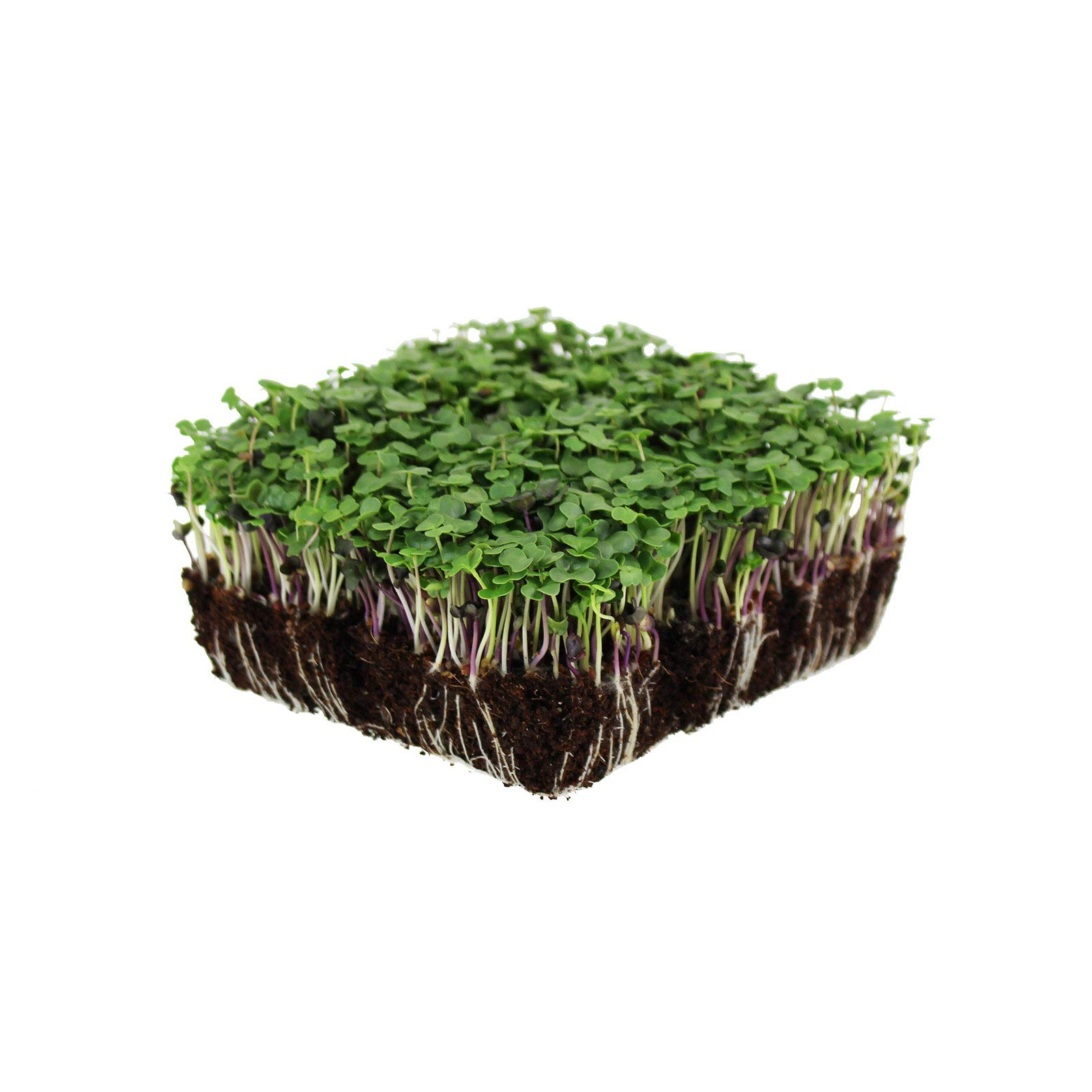 Basic Salad Mix Micro Greens Seeds: 25 Lb - Bulk Non-GMO Seed Blend: Broccoli, Kale, Kohlrabi, Cabbage, Arugula, More