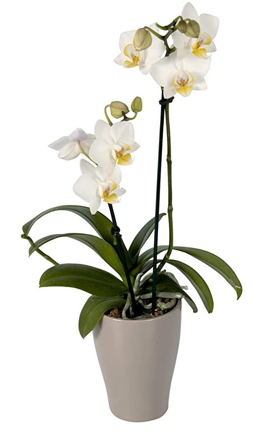house plants with yellow and green leaves, house plants that bloom, house plant green and white, house plants with pink, house plants that flower, house plants with lily, peace lily with pink blooms, house plants with variegated leaves, house with flowers, house plant which blooms flowers, house plants with red, water plants with white blooms, on house plants with white blooms