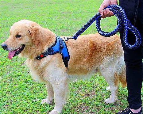 Chaleco ajustable para perro con correa de perro trenzada, Hebilla ...