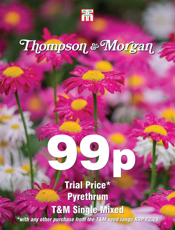 Pyr/èthre T/&M Single Mixed 100 graines Fleur Thompson /& ‿Morgan