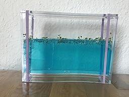 ameisen terrarium kaufen