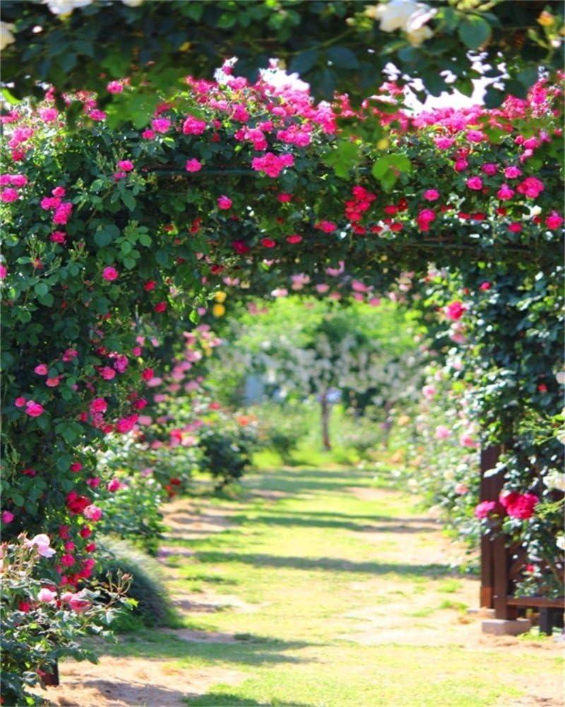 aaloolaa 2,5 x 3 m vinilo fotografía telón de fondo jardín flores arco verde licencia camino naturaleza fondos para fotos Party fondo de fotografía de estudio accesorios: Amazon.es: Electrónica