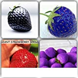 Mixed Giant Strawberry Seeds Black, Blue, Red and Purple 100 mixed seeds