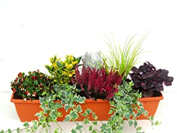 Immergrunes Balkonpflanzen Set Fur Balkonkasten 80 Cm Lang Amazon